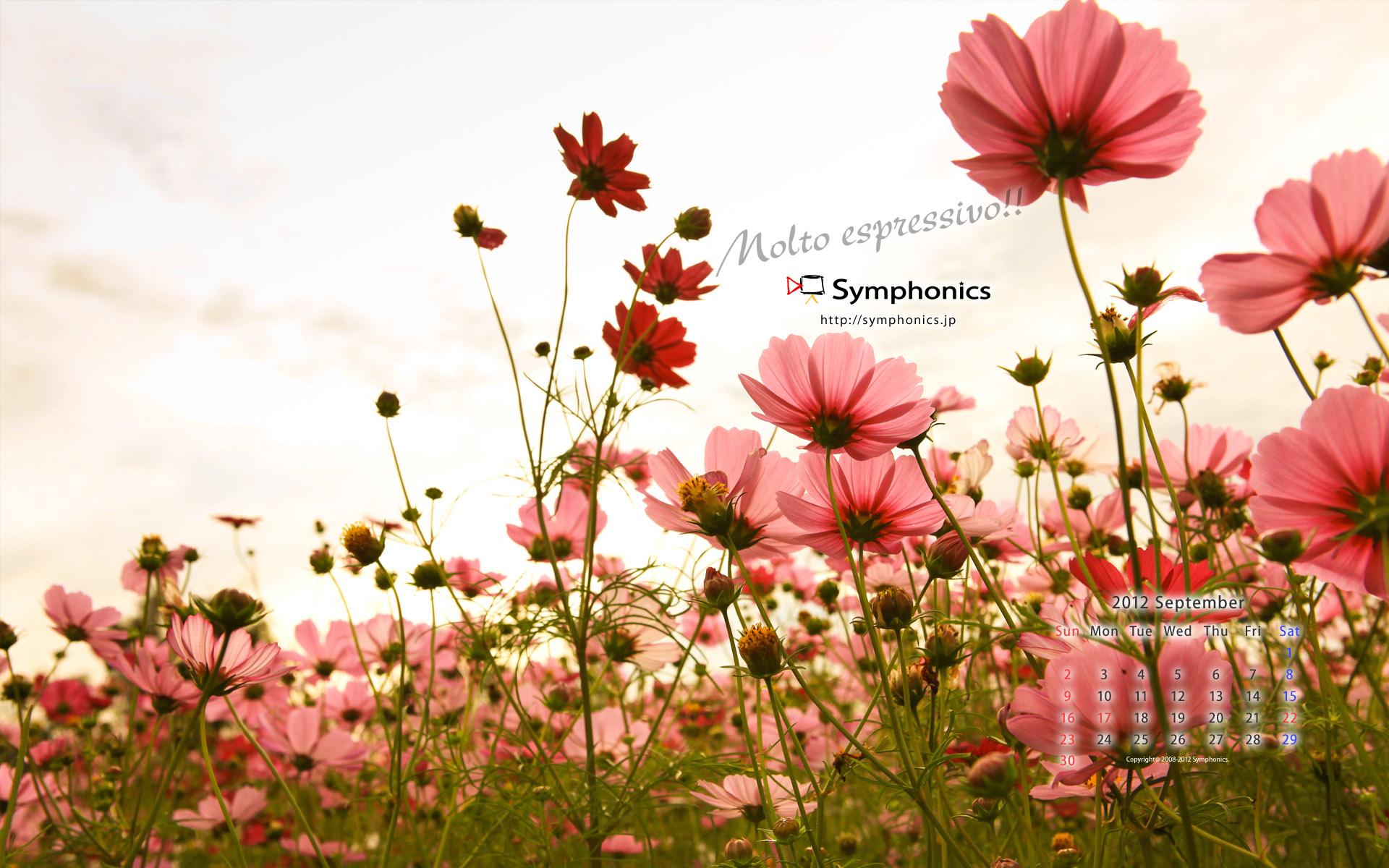 9月のsymphonics壁紙を更新しました Symphonics シンフォニクス株式会社 映像制作 技術 オーケストラ コンサートdvd ビデオ撮影